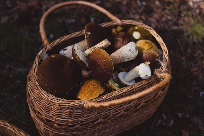 basket-cooking-food-74510