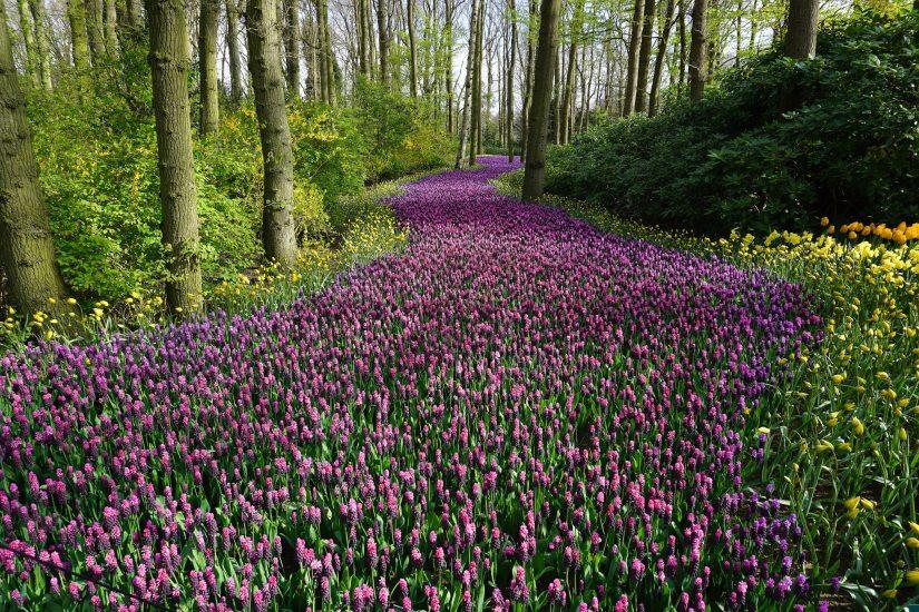 beautiful-bloom-blooming-414083